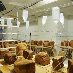Am Tropf: Chemmische Festigung des Sandsteins im Berliner Labor von Restaurierung am Oberbaum