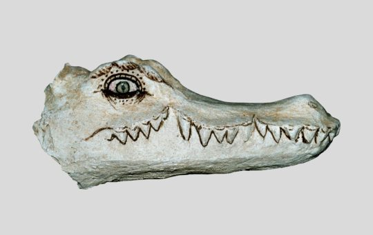 Mumienmaske Krokodil